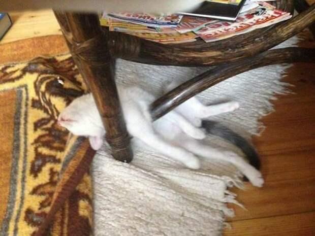 40 фото, доказывающих, что кошки могут спать где угодно