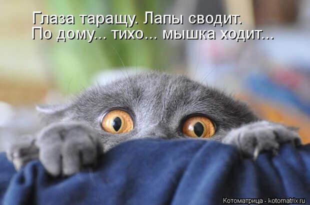 kotomatritsa_3C (700x464, 253Kb)