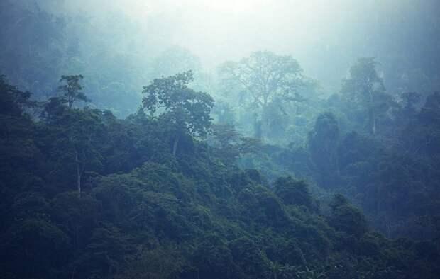 Влажные регионы тропиков постепенно смещаются к полюсам