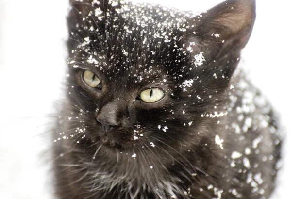 Пошёл в лес за ёлочкой, вернулся с котом. Мужчина обнаружил в зимнем лесу продрогшего чёрного котёнка и не смог пройти мимо