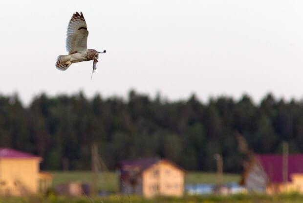 Жизнь птиц вокруг нас