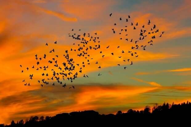 Стая птиц на закате