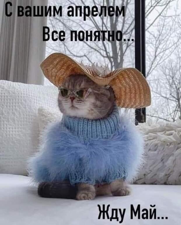 Возможно, это изображение (кот и текст «свашим шим апрелем все понятно жду май...»)