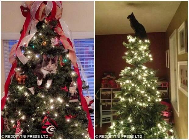 Кот - оригинальная альтернатива ёлочной игрушке животные, кот, коты, кошки, новый год, приколы с животными, фото, юмор