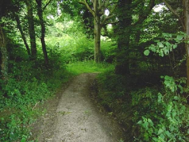 Клэпхемский лес и его загадки
