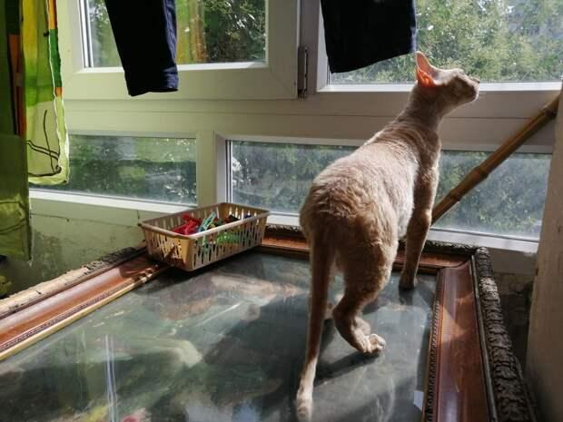 Хозяева кормили кошку лишь макаронами и не ухаживали за ней. Она нужна была только для разведения