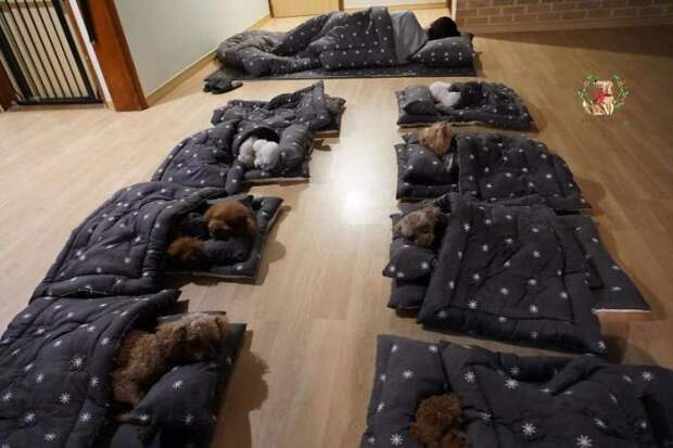 Интернет покорили фотографии спящих щенков из специального детского сада для собак