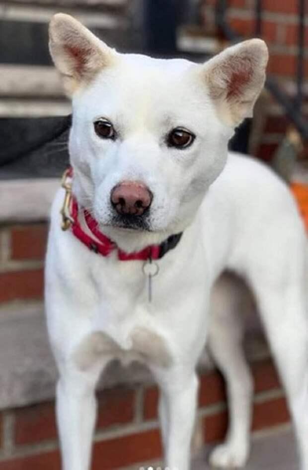 Собака с коричневыми глазами