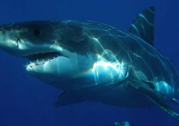 В Калифорнии акула убила серфингиста