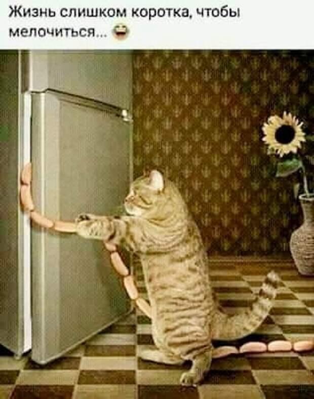 Возможно, это изображение (кот и текст «жизнь слишком коротка, чтобы мелочиться...»)