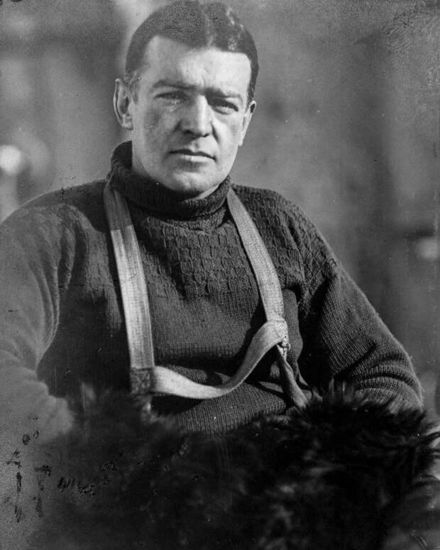 69 съеденных собак и один вкусный корабельный кот: история одной экспедиции в Антарктику