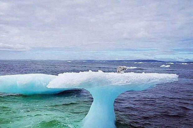 Рыбаки увидели нечто удивительное: на айсберге, как на пьедестале, сидел пестрый зверь