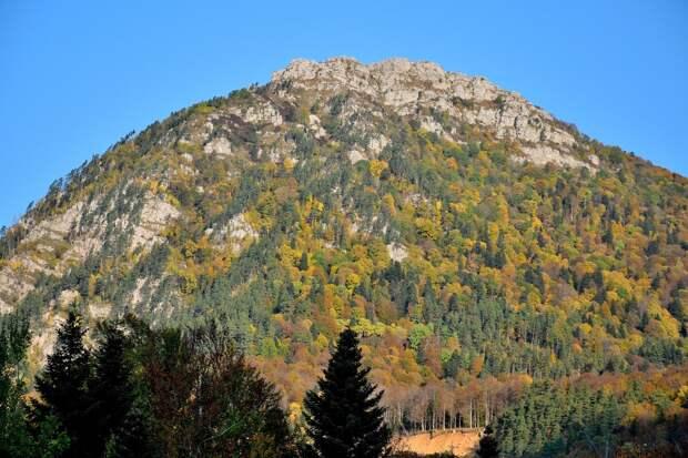 Черногор