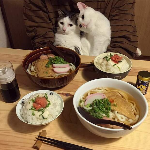 Посмотрите, коллега, на это великолепие! Ах, как вы правы! дегустация, еда, животные, кот, коты, позитив, реакция, юмор