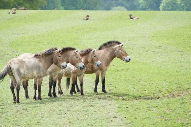 Учёные сообщили о последствиях реинтродукции вымерших животных