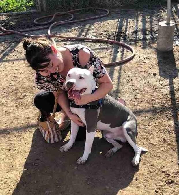 Люси признаётся, что плакала, увидев своего пса в мире, животные, находка, питбуль, повезло, пропажа, собака, сша