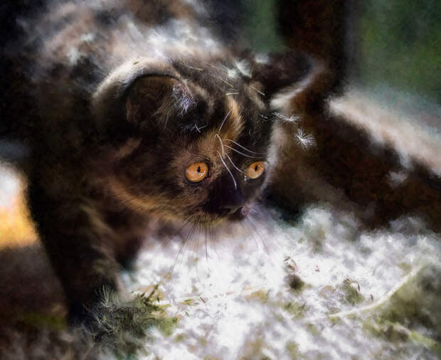 Милые мурлыки Натальи Кузнецовой: мордочка, хвост и четыре лапки!