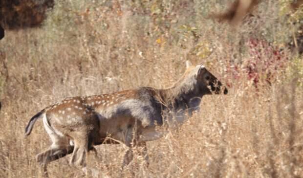 ВРостовской области вприроду выпустили 30 оленей