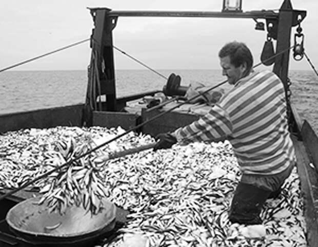 Европа кинула латышских рыбаков без улова