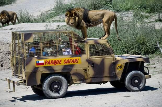 Самый правильный зоопарк, на мой взгляд — здесь в клетках сидят не звери, а посетители!