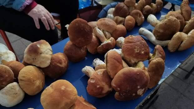 Жители Петербурга и Ленобласти продолжают собирать грибы в лесах