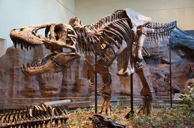Ученые сделали открытие о походке царя динозавров