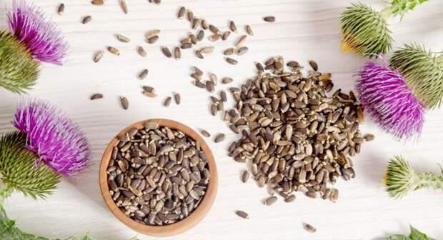 semena-rastoropshi