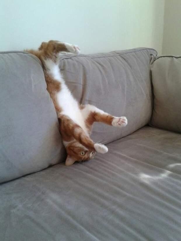 Коты, которых жизнь завела в тупик.