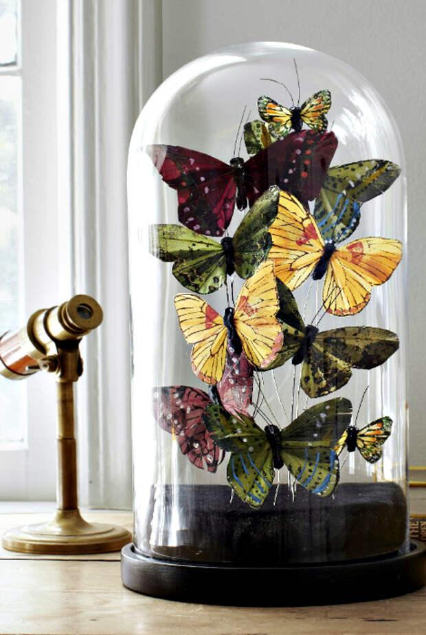 Бабочки под стеклянным куполом.