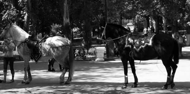 В Севастополе взбесившиеся животные чудом не покалечили детей (видео)
