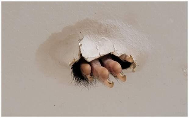 Женщина зашла в ванную и испугалась, увидев лапу из дыры на потолке
