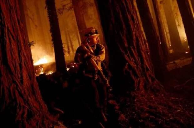 Калифорния как в аду: пожарные зафиксировали более 560 очагов возгорания (1 фото)