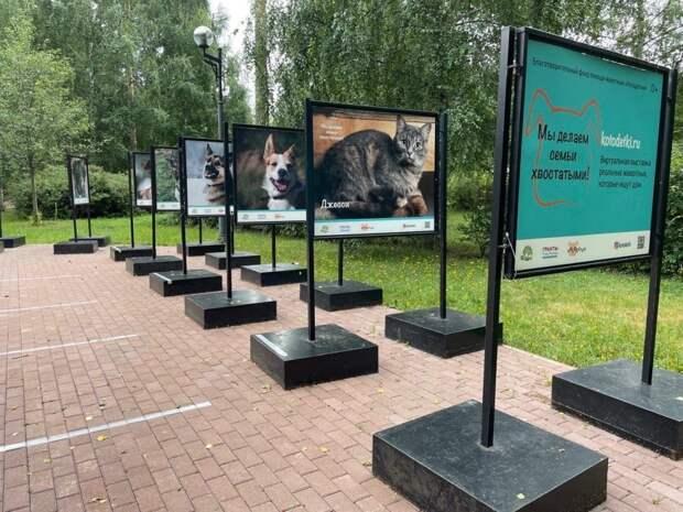 В Джамгаровском парке открылась фотовыставка животных из приюта