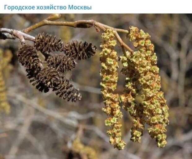 Аллергикам из Марьина временно лучше ограничить прогулки в парке