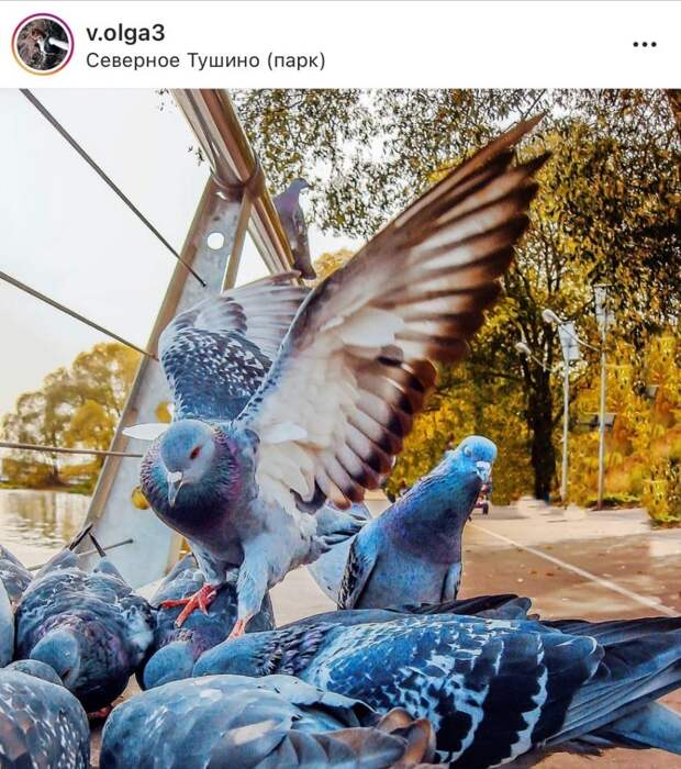 Фото дня: голубиные разборки