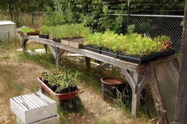 Растения нуждаются в регулярном внесении бактерий