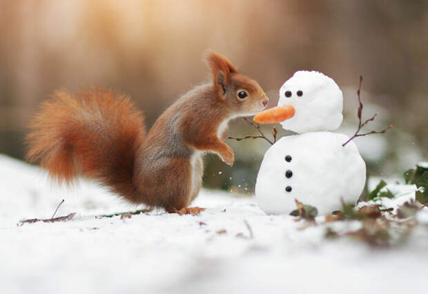 Непростые взаимоотношения со снеговиком.