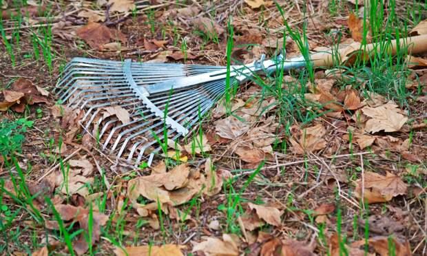 Почему нельзя убирать с огорода прошлогодние листья