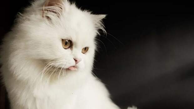 Кошки помогут ученым в исследовании генома человека
