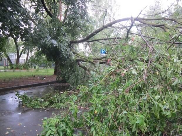 На бульваре Яна Райниса дерево упало, никого не задев