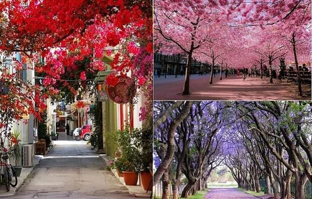 10 потрясающих снимков улиц и парков в тени цветущих деревьев