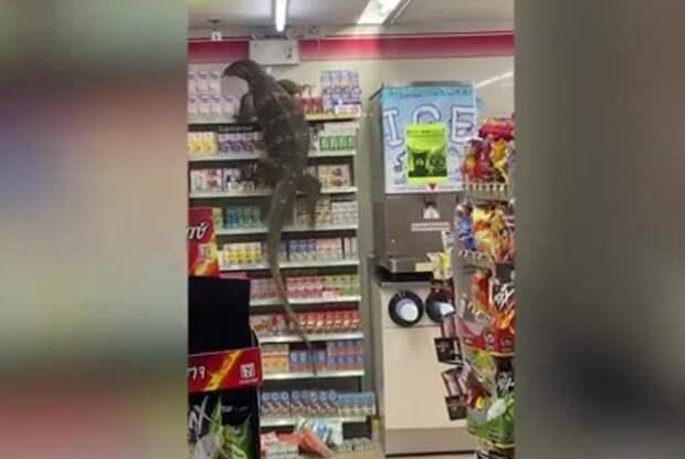 Огромный варан устроил переполох в магазине и поразил Сеть