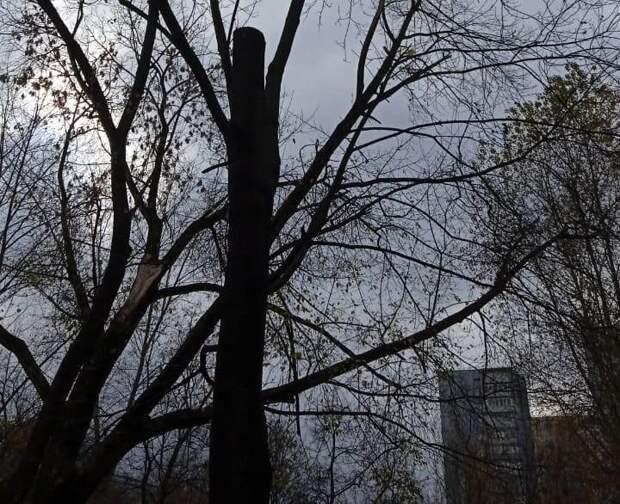 На Коминтерна спилили сломанную ветку дерева