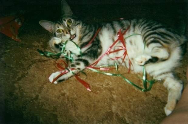 Разрушители Рождества