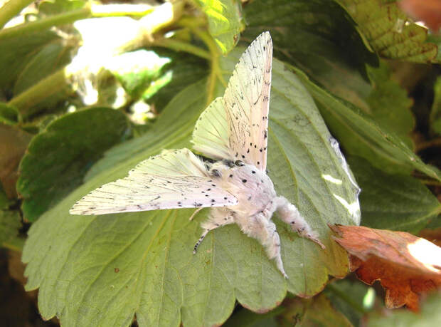 caterpillar-moth-butterfly-before-after-metamorphosis-21-1