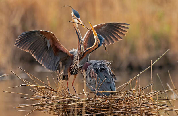 самое интересное животные Фотография В мире фотограф интересная интересное мир
