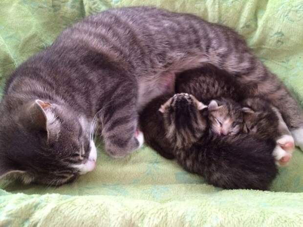 """""""Это Никита, Дима и Алина!"""" У кошки-кукушки родились котята, но один из них в последствии оказался фальшивым!)"""