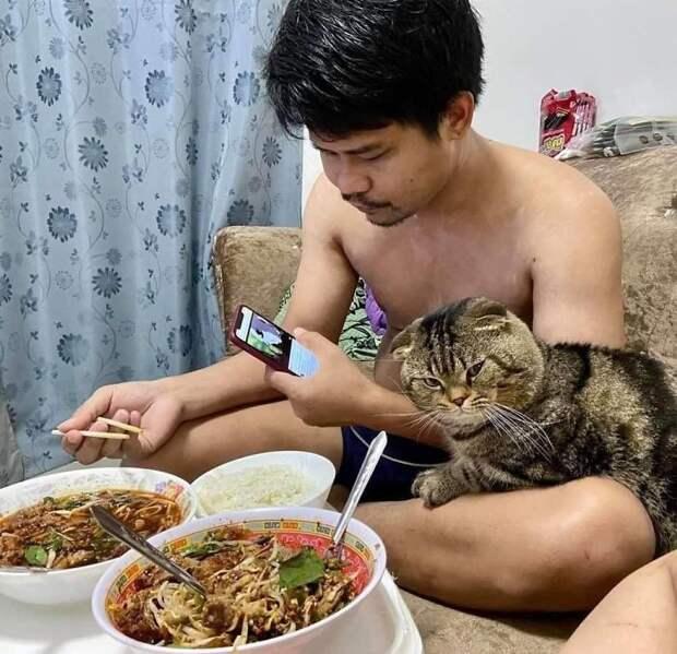 Обиженная жена показала фото, жалуясь, что «украл» её мужа необычный кот Джарвис