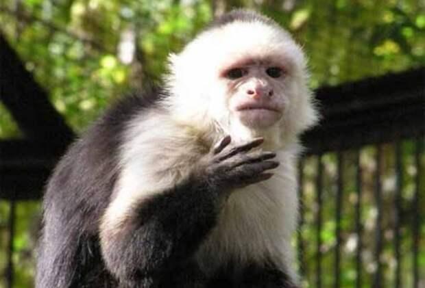Проституция и обезьяны