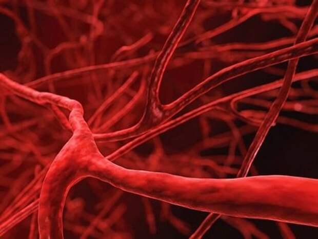 Как укрепить стенки сосудов и вен: средства и препараты для укрепления  капилляров, витамины, таблетки, лекарства